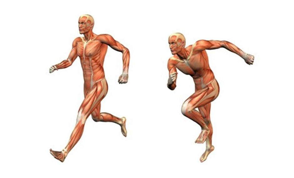 steroids for muscle pain